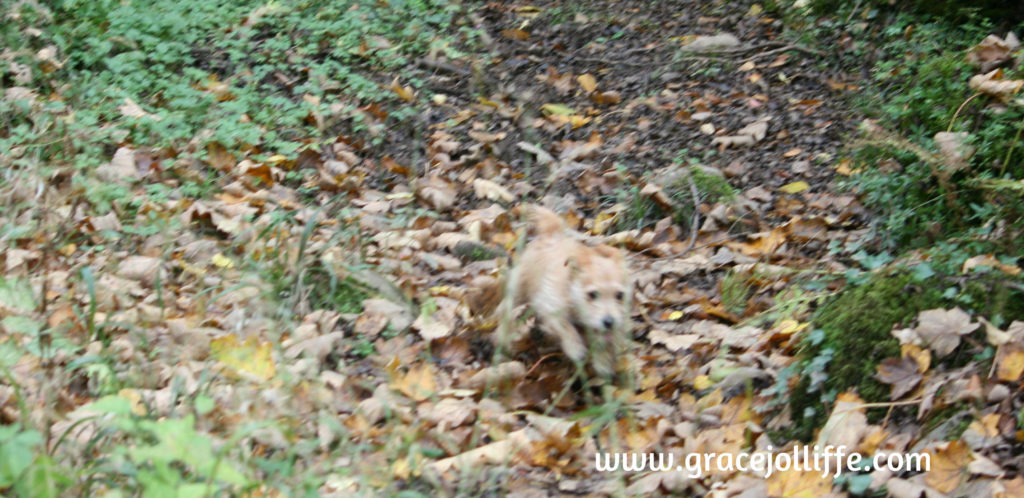 Tiny dog running in woodlands illustrating article about how to reconnect your children with nature